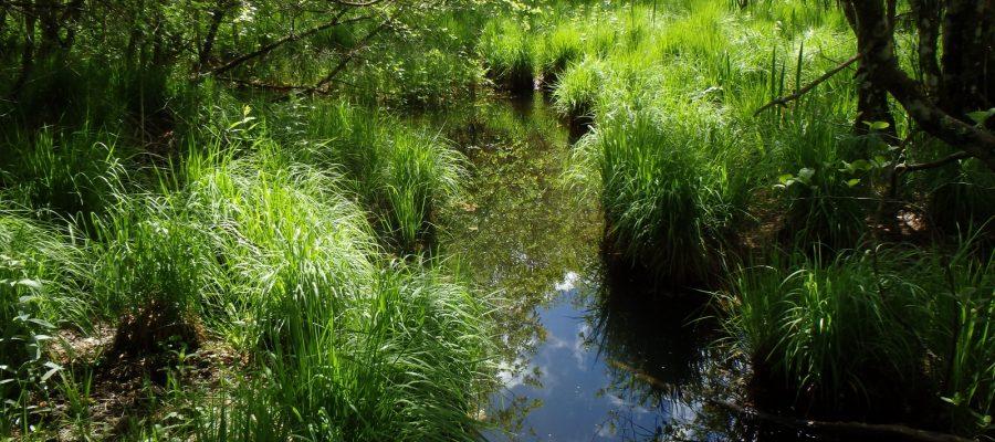 Nature – Environnement